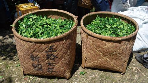 宇治田原のお茶