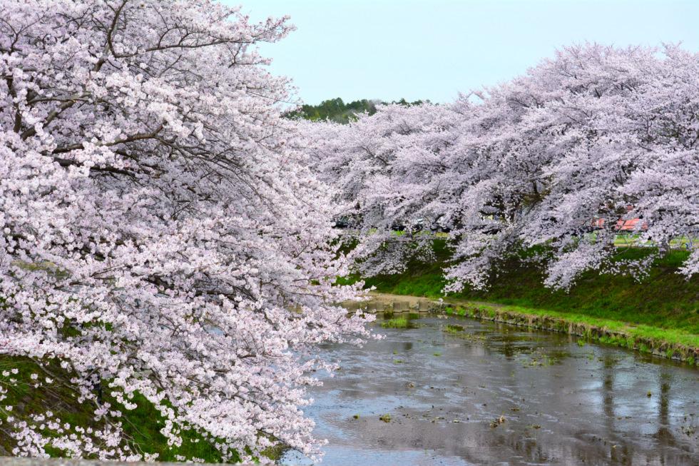 世界遺産と日本遺産を巡るサイクリングコース